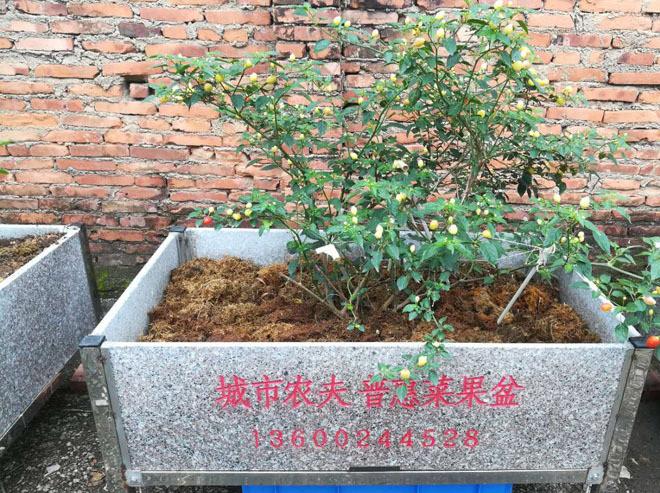 绿色生活盆、舒闲种植、屋顶隔热、天台种植、花盆使用