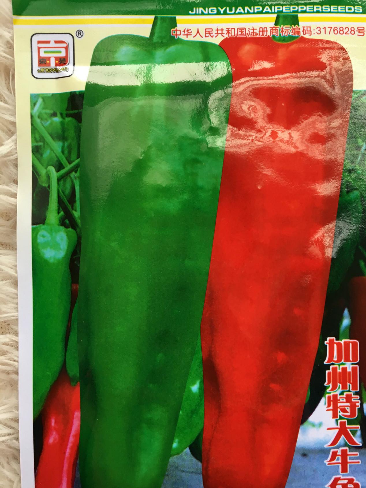 高产灯笼椒庭院香脆辣椒种子 牛角王辣椒种子小苗辣椒苗量大优惠
