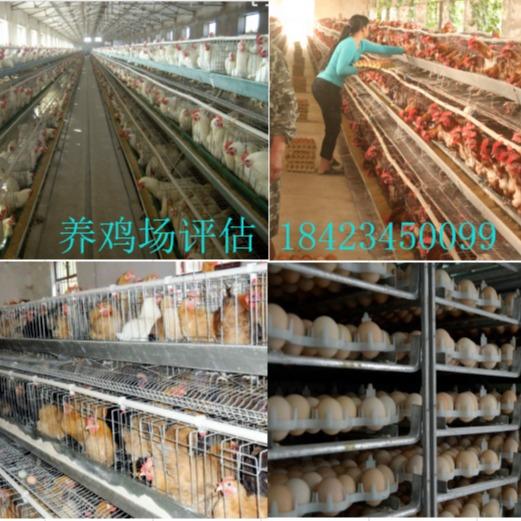 养鸡场评估养猪场评估养牛场评估鱼塘评估养兔场评估鸭场鹅场环保评估