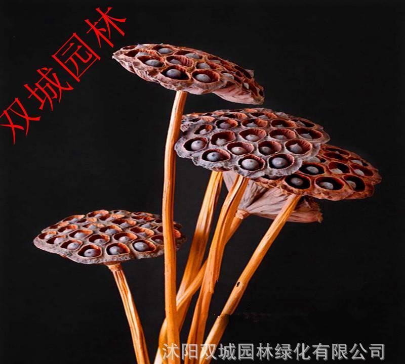 低价干花批发 特大纯天然装饰莲蓬 4-6cm钢丝杆仿真花装饰道具