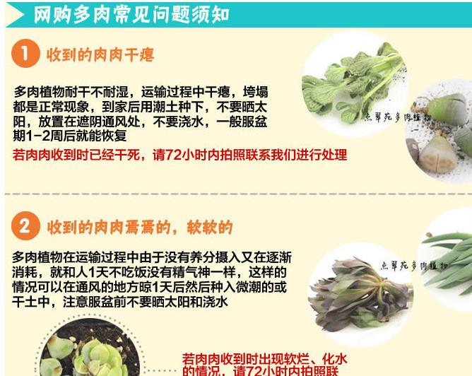 多肉植物问题