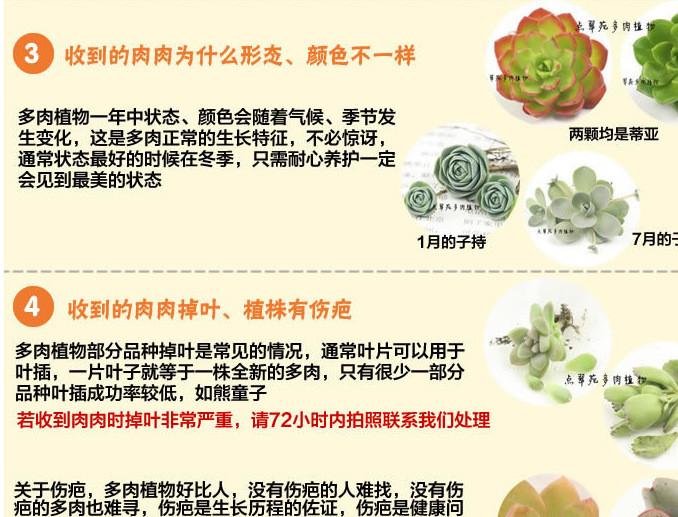 多肉植物问题 (1)