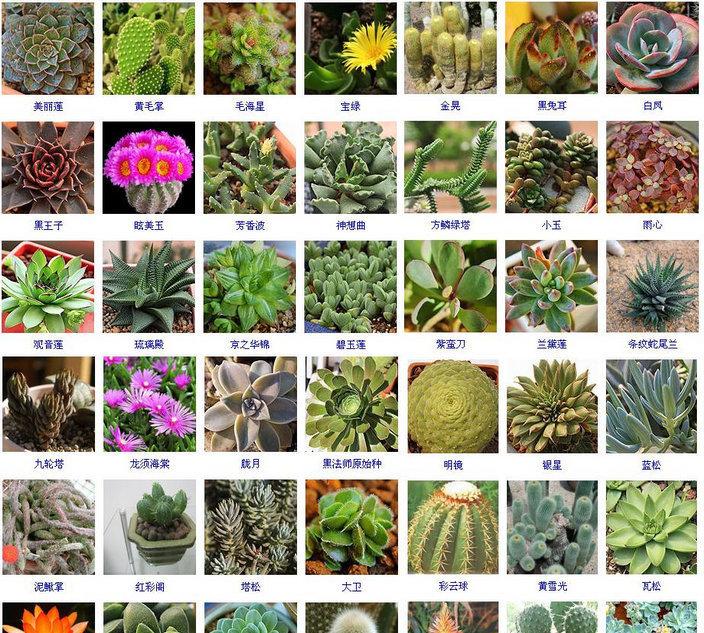 多肉植物名称 (3)