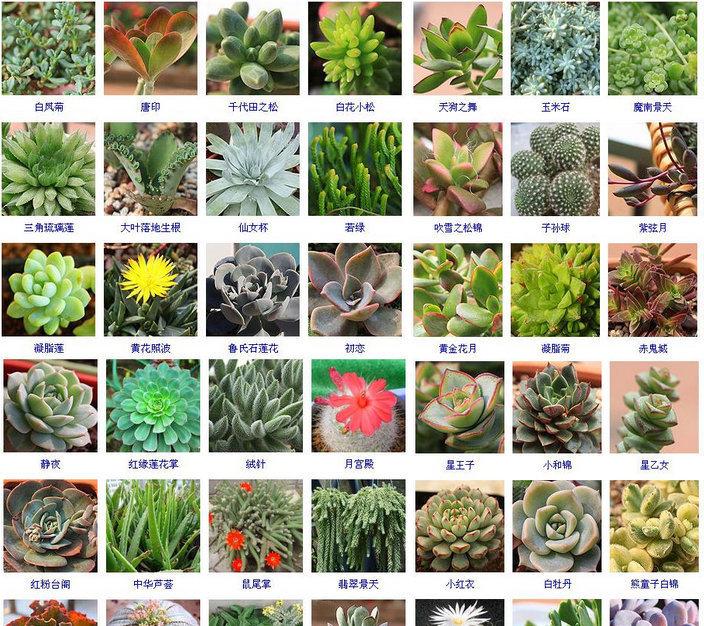 多肉植物名称 (2)